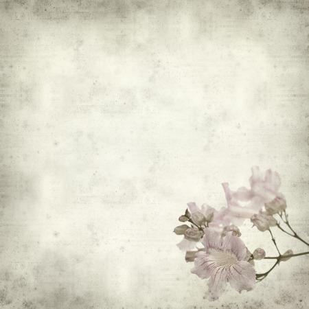 Textured old paper background with pink tekoma flowers stock photo textured old paper background with pink tekoma flowers mightylinksfo