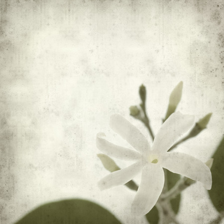 white textured paper: textured old paper background with white jasmine flower