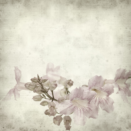 textured old paper background with pink tekoma flowers photo