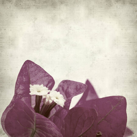 textured old paper background with Bougainvillea photo