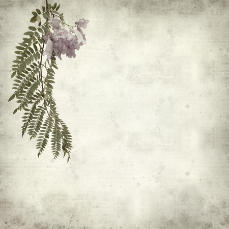 textured old paper background with Jacaranda; photo