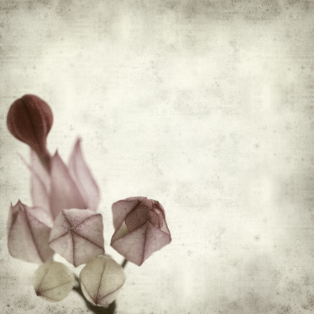 textured old paper background with exotic flower  photo
