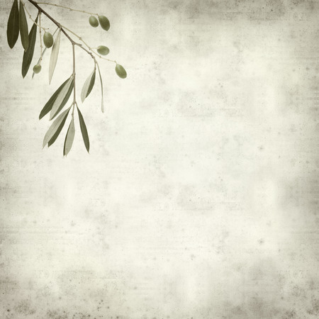 textured old paper background with green forming olives photo