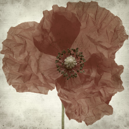 dubium: textured old paper background with poppy