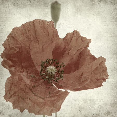 textured old paper background with poppy