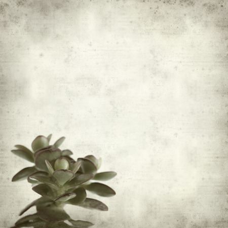 crassula: textured old paper background with crassula plant