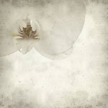 white textured paper: textured old paper background with white Phalaenopsis orchid