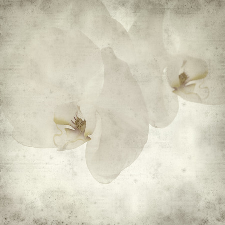 white textured paper: textured old paper background with white orchid