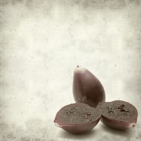 textured old paper background with opuntia cactus fruit photo