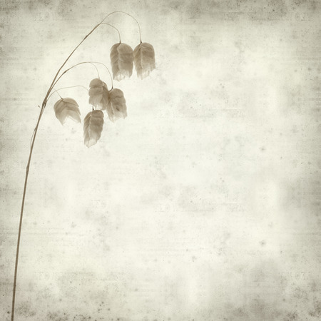 textured old paper background with Biza, quacking grass Stock Photo