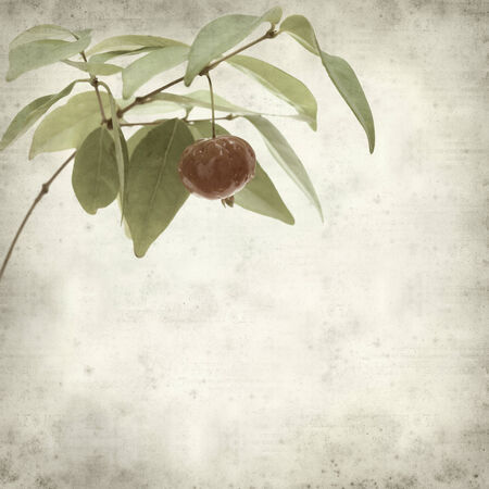 textured old paper background with Eugenia uniflora fruit photo