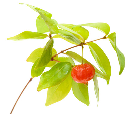antidiabetic: Eugenia uniflora fruit on a branch isolated on white background