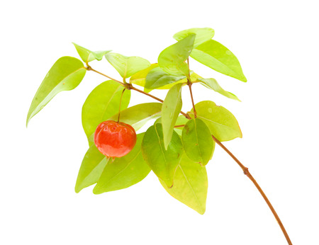 Eugenia uniflora fruit on a branch isolated on white background photo