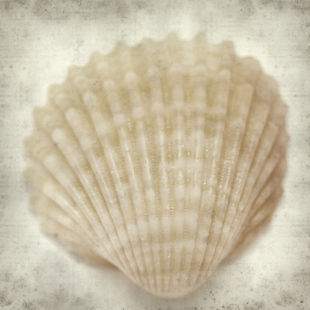 cockleshells: textured old paper background with cockle shells