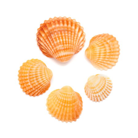 cockle: small cockle shells isolated on white background