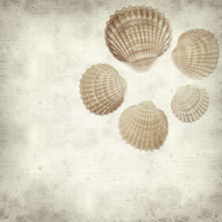 textured old paper background with cockle shells photo