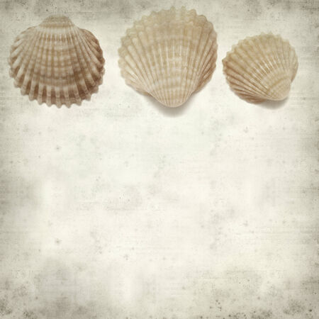 cockle: textured old paper background with cockle shells
