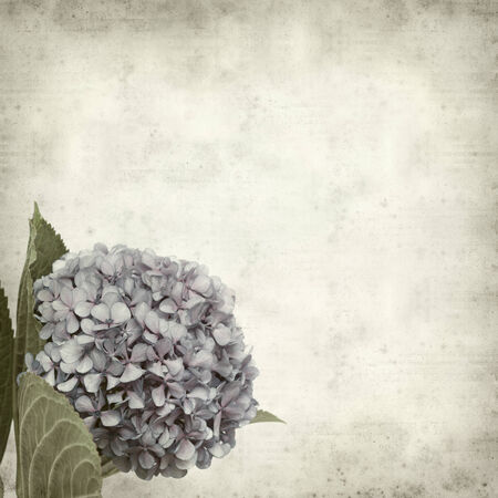 textured old paper background with blue lilac hydrangea photo