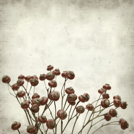 textured old paper background with bunch of rosehips photo