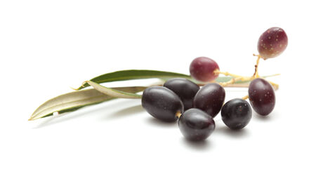 small branches with ripening olives isolated on white background photo