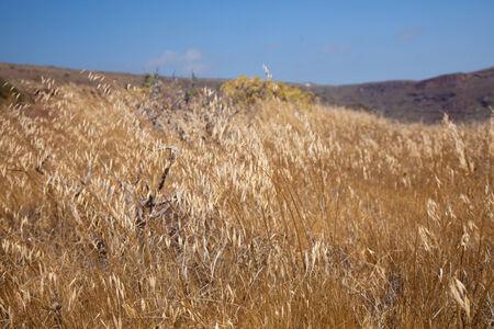 aborigin: Landscape around Barranco de Guayadeque Ravine, Gran Canaria, dry summer