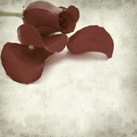 wilting: textura de fondo de papel viejo con rojo marchitamiento p�talos de rosa