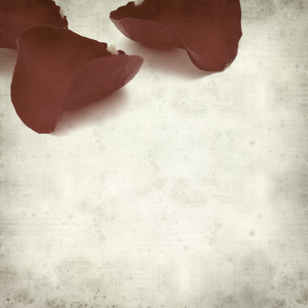 wilting: textured old paper background with wilting red rose petals