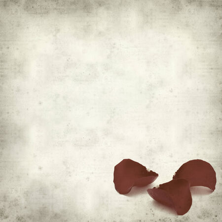 textured old paper background with wilting red rose petals photo