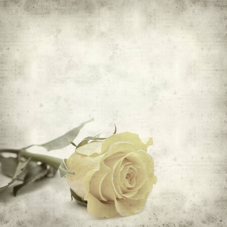 textured old paper background with yellow rose photo