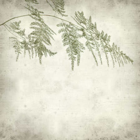 textured old paper background with Lace Fern leaf photo