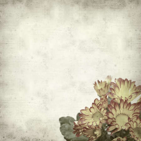 textured old paper background with yellow and red chrysanthemum photo
