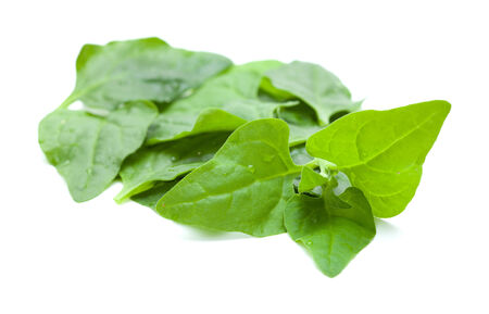invasive plant: Tetragonia tetragonioides, New Zealand spinach