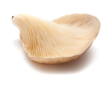 gilled: oyster mushrooms isolated  on white