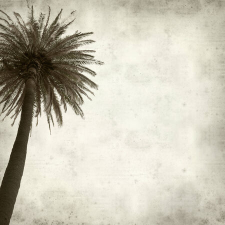textured old paper background with tall palm tree photo