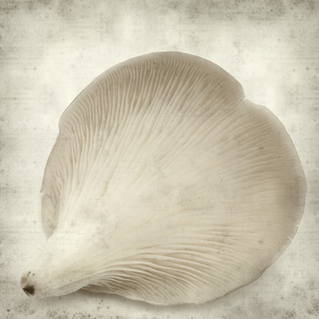 textured old paper background with oyster musroom Stock Photo