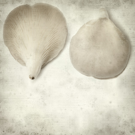 gilled: textured old paper background with oyster musroom Stock Photo