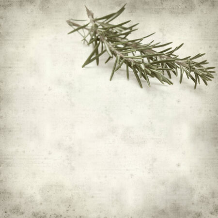 textured old paper background with rosemary photo