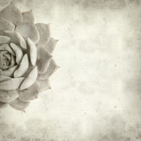 textured old paper background with sempervivum photo