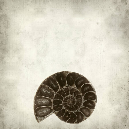 fractality: textured old paper background with ammonite