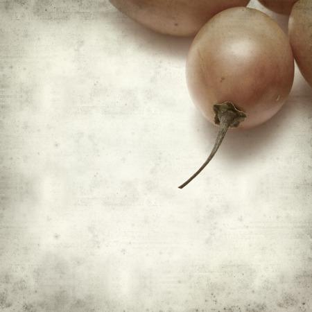 tomate de arbol: textura de fondo de papel viejo con la fruta del tomate de �rbol