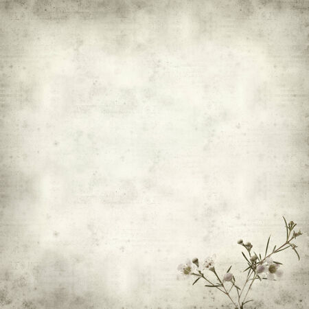 textured old paper background with small pink blooms of waxflower photo
