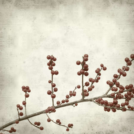 winterberry: textured old paper background with winterberry