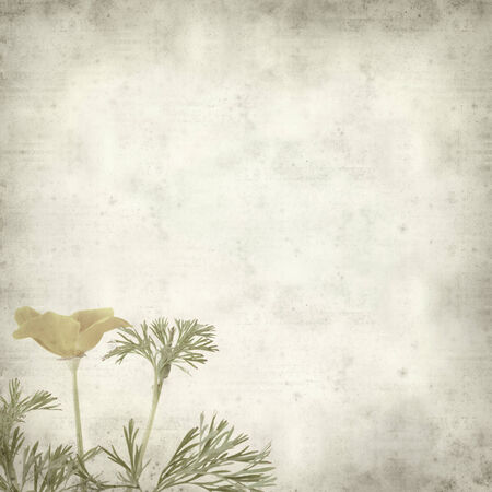 californian: textured old paper background with Californian poppy Stock Photo