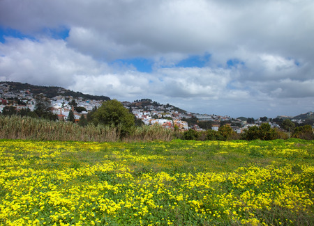 Inland Gran Canaria, view towards Historical town Teror ovr a field of flowering oxalis Reklamní fotografie