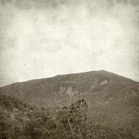 timeless: textured old paper background with pine forest of Fuerteventura, Pinar de Betancuria