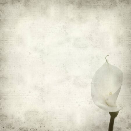 white textured paper: textured old paper background with white calla lily