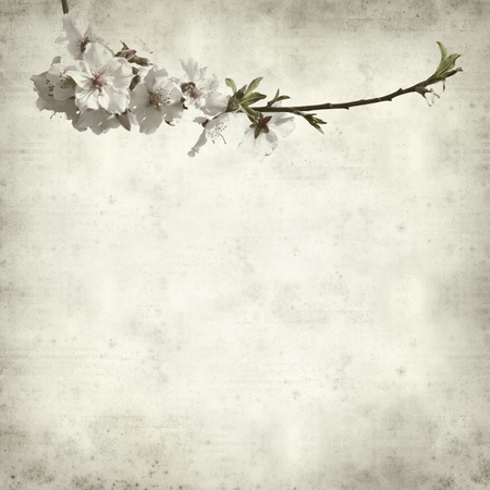 textured old paper background with aalmond tree blossoms photo