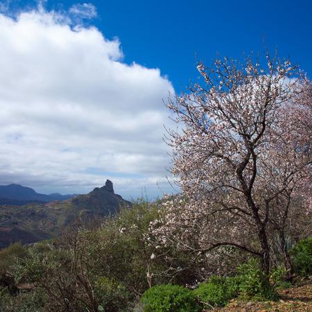 blossom time: Caldera de Tejeda in winter, almond blossom time Stock Photo