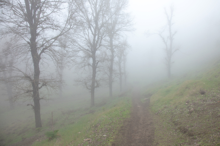 all weather: Inland Gran Canaria, fog at Las Montanetas, hiking trail