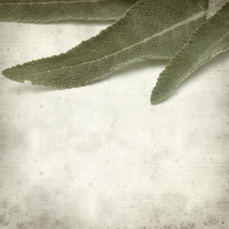 canarian: textured old paper background with canarian sage